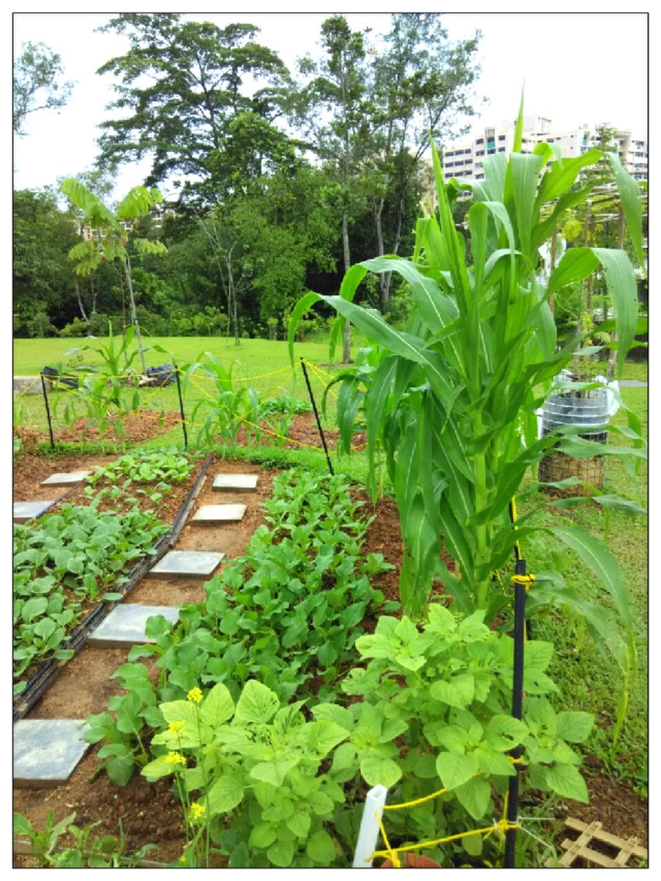 community garden choa chu kang park