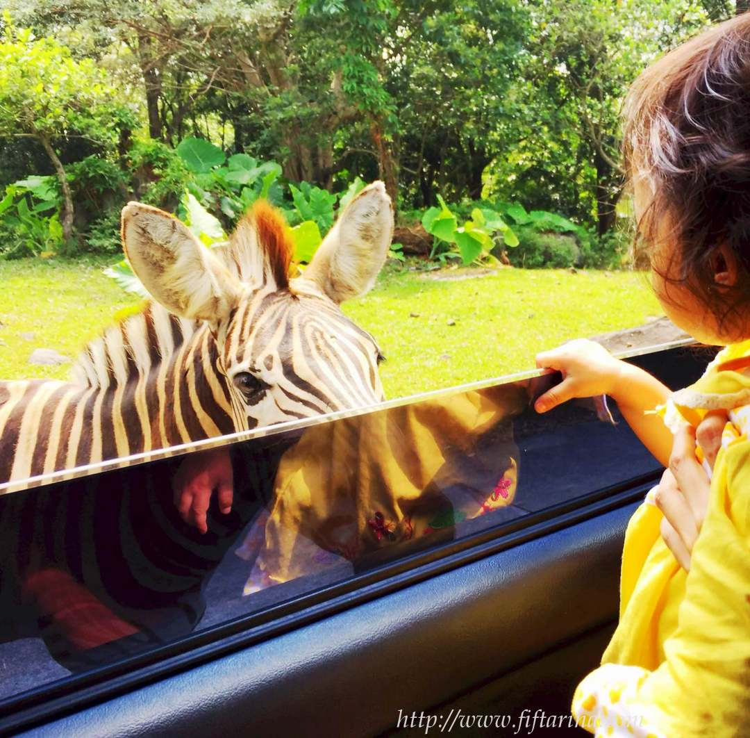animal-close-encounter-taman-safari2