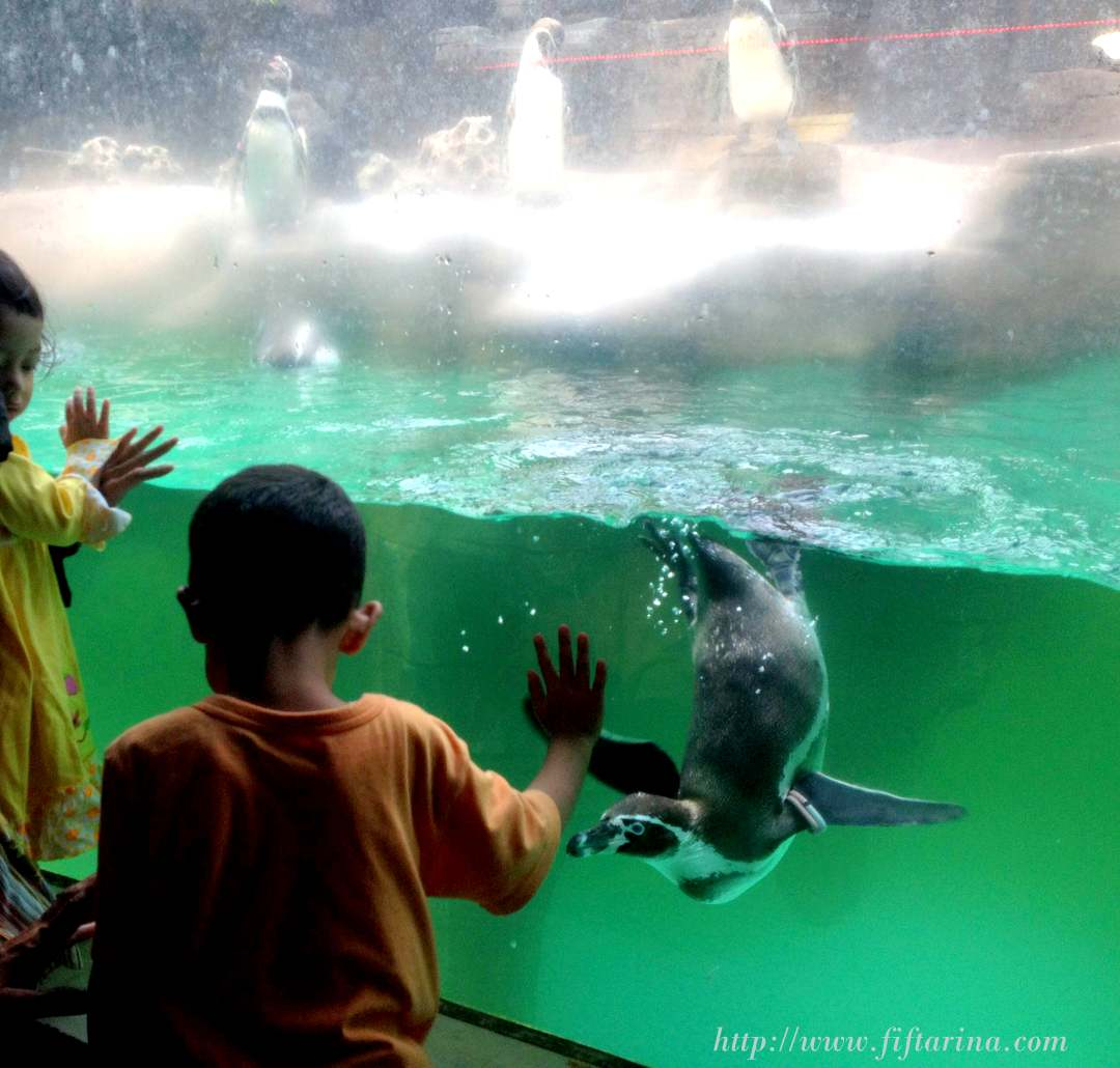 Seeing the penguins