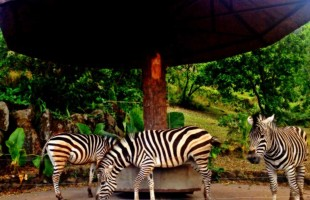 My review of Taman Safari Indonesia 2