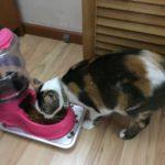 Melatih Kemandirian Hari Ke-2: Menuang Makanan Kucing