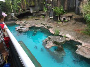 Aquatic Land rumah nya pinguin dan hewan laut di Taman Safari
